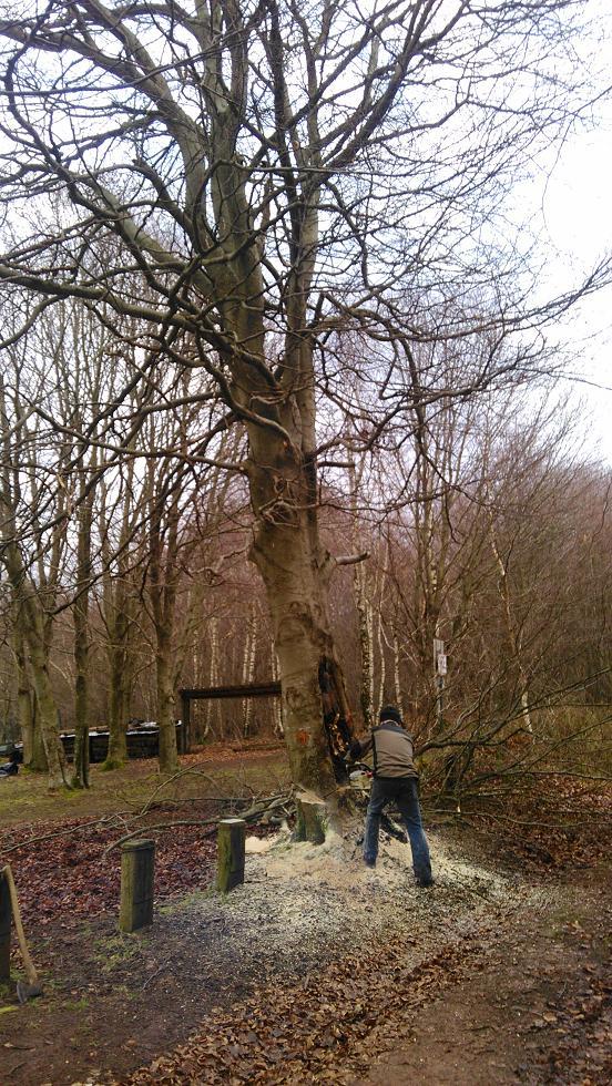 Abattage d'arbres au chalet