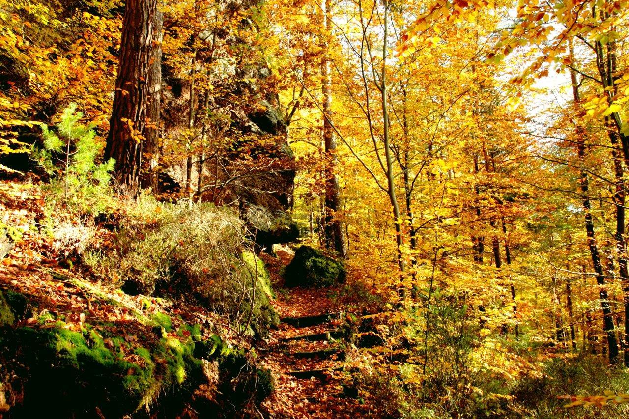 La forêt aux couleurs automnales