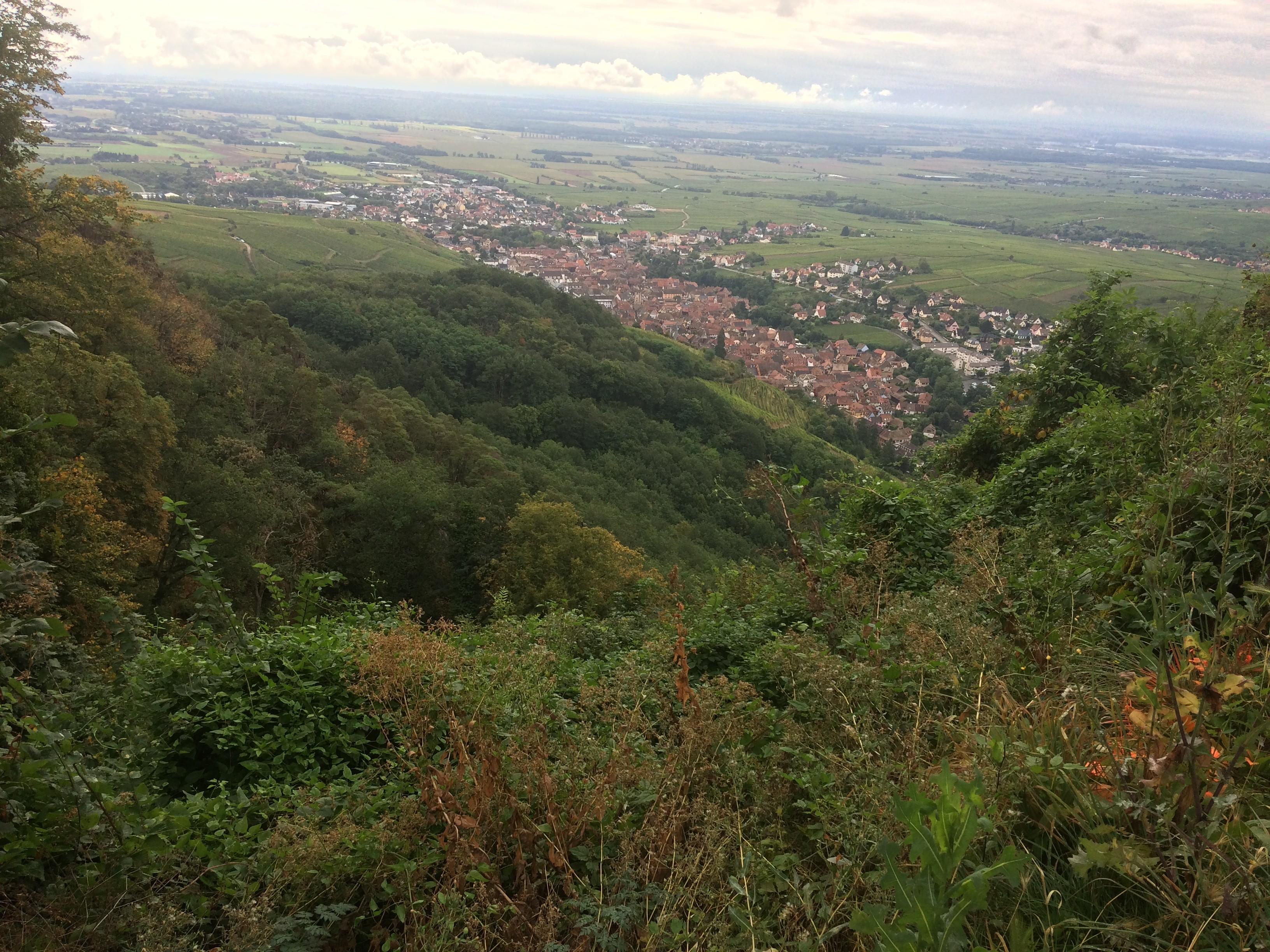 Vue sur Ribeauville